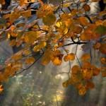 jesen_620x0